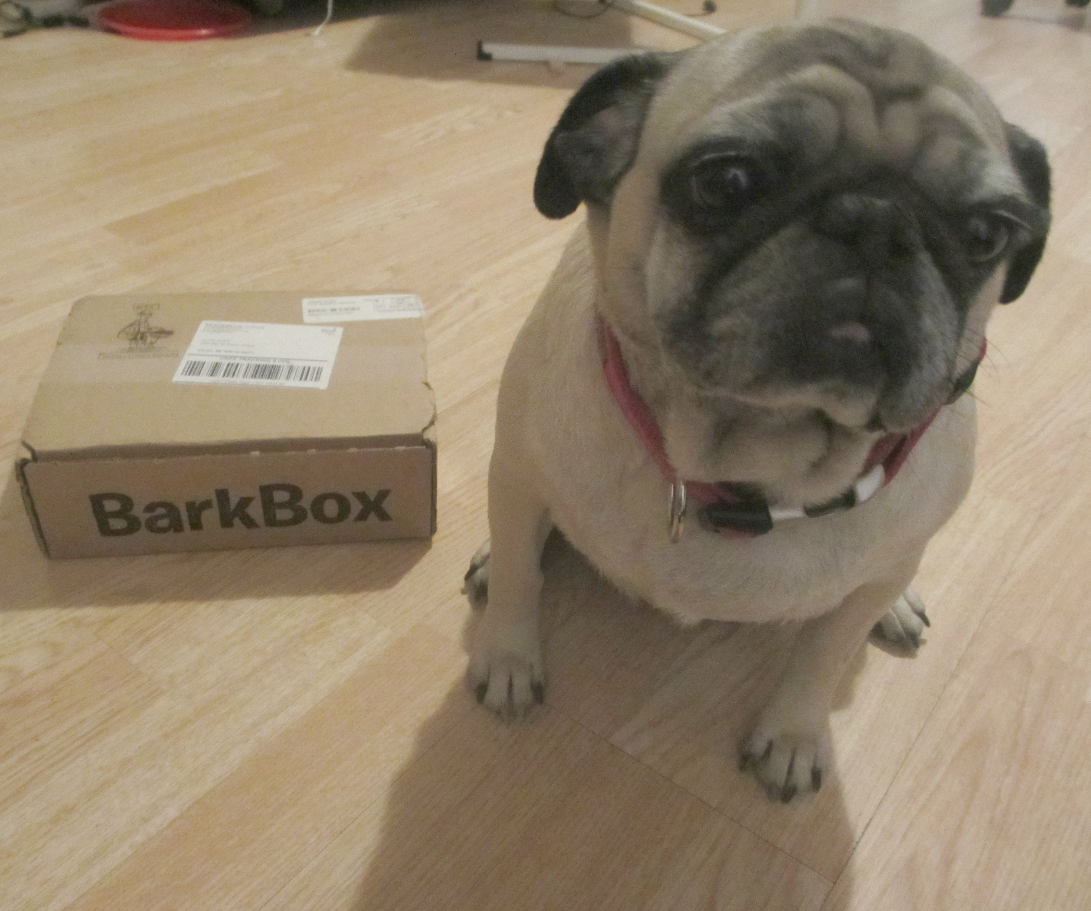 Barkbox Monthly Subscription Box For Dogs Review