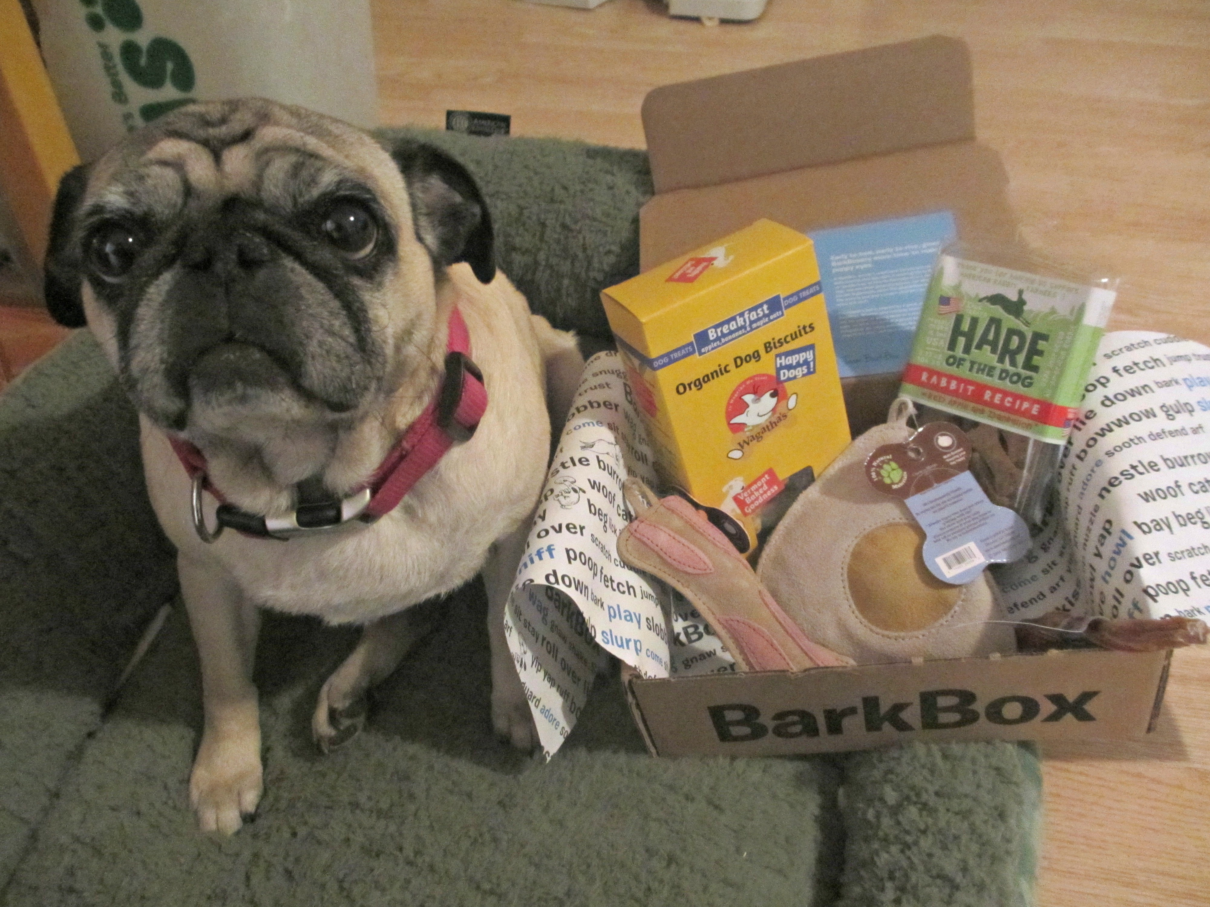 barkboxmarchbeans & Barkbox Monthly Subscription Box For Dogs Review Aboutintivar.Com