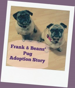 frank and beans the pugs adoption story