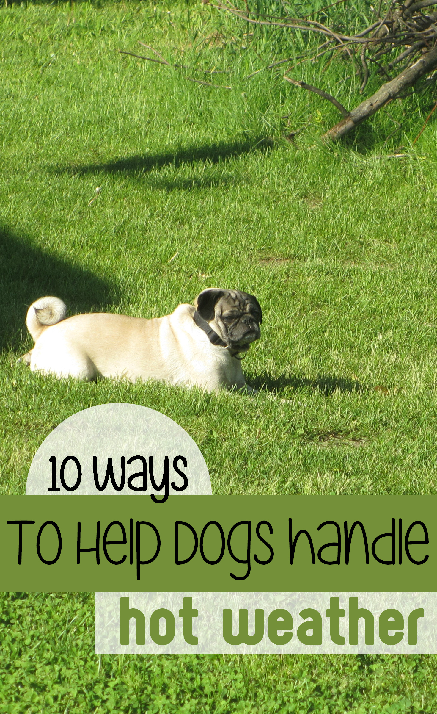 10 ways to help dogs handle summer weather