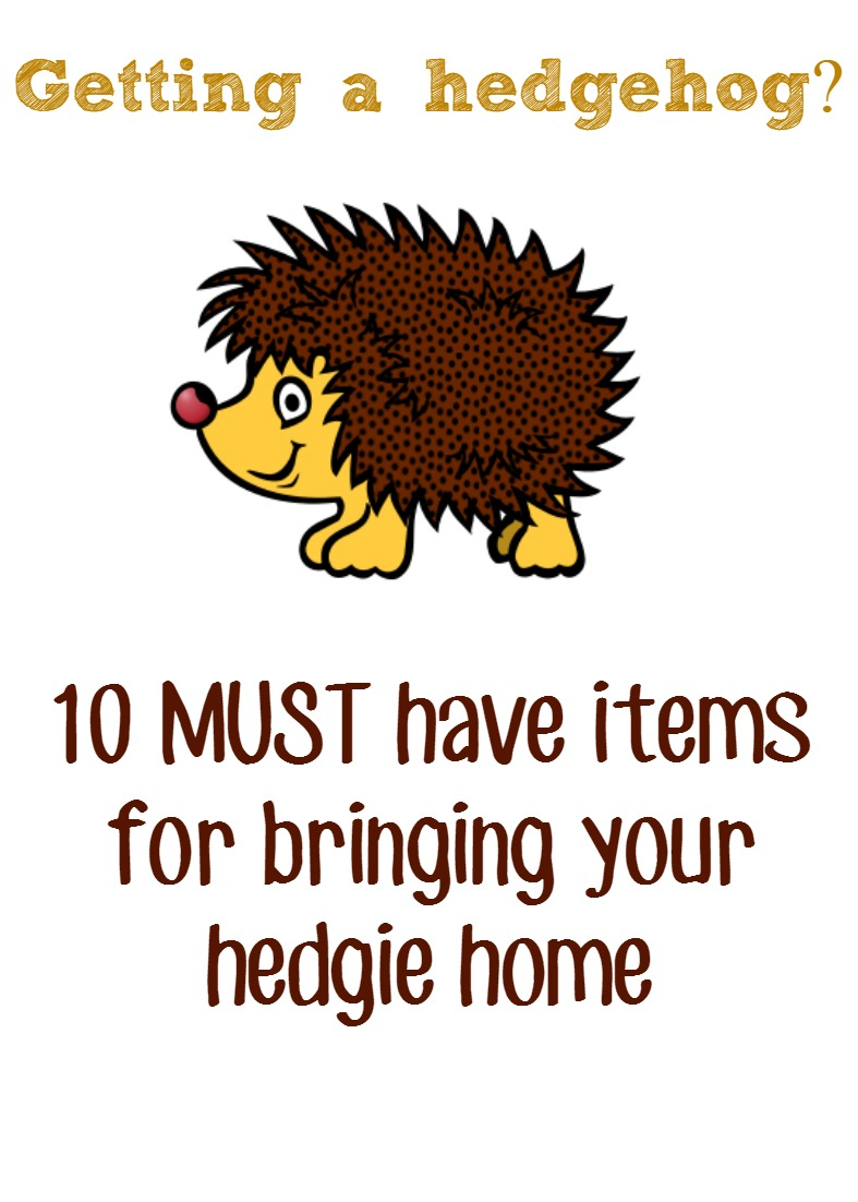 Pygmy Hedgehog Pet Must Have Items