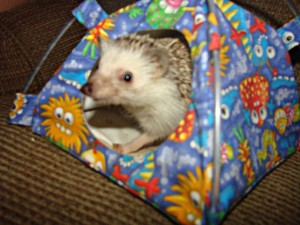 hedgehog in a tiny tent