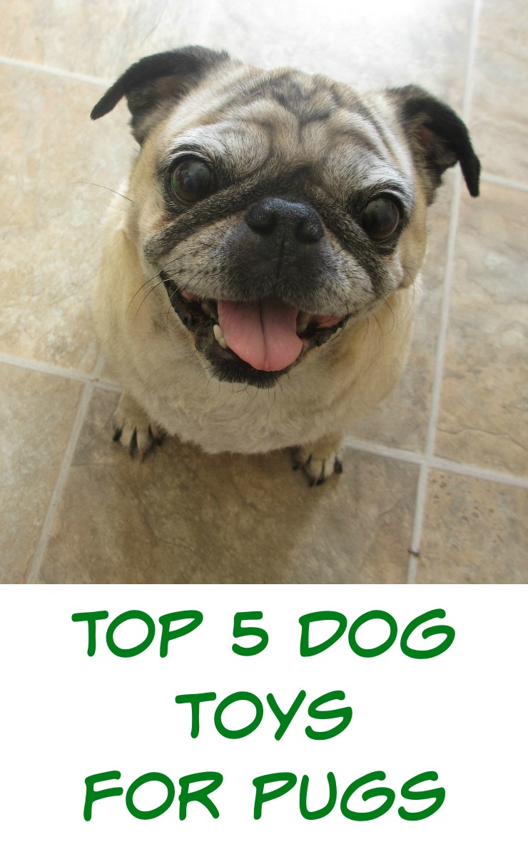 Favorite dog toys for pugs. I've had two pugs for three years, and they live the spoiled pug life. We've tried so many dog toys that fell apart or they just didn't play with. Here are our top 5 picks for favorite dog toys that last.