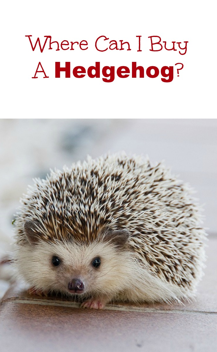 Posts About Hedgehogs Frank Loves Beans