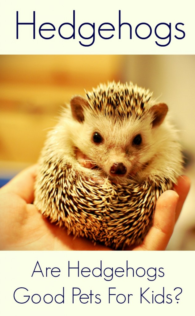 Hedgehogs as pets for kids