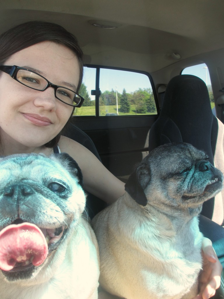 pugs in the car