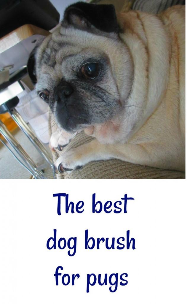 the best dog brush for pugs