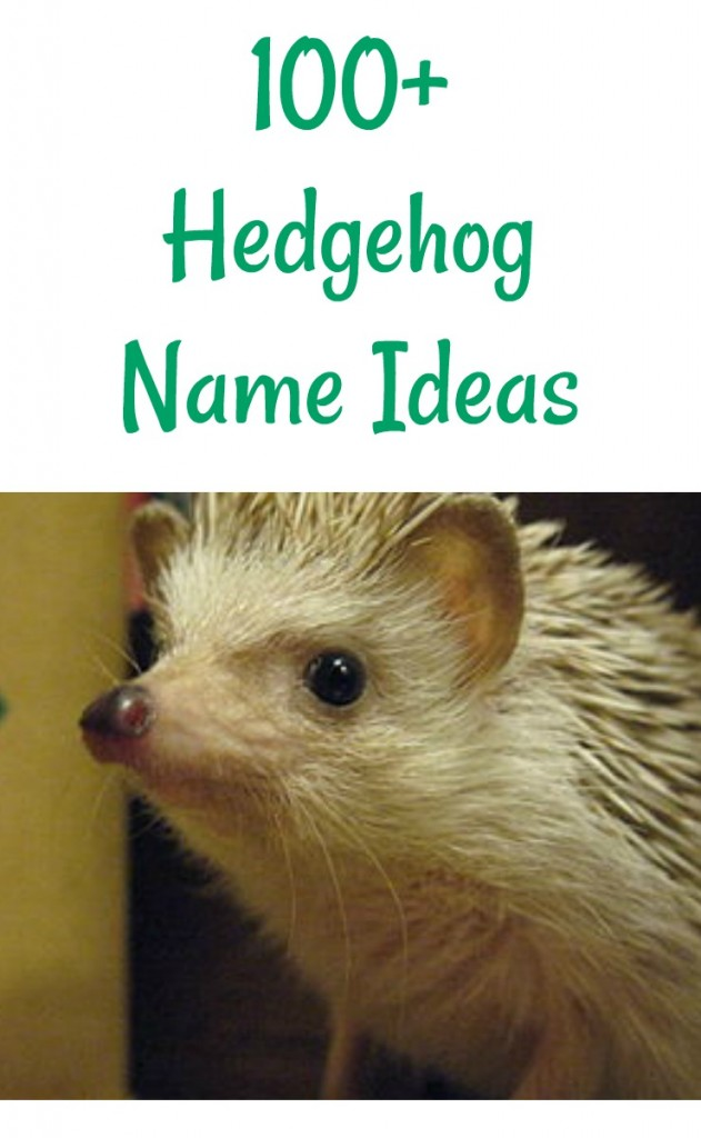 Pet hedgehog name ideas for hedgies that are boys or girls.
